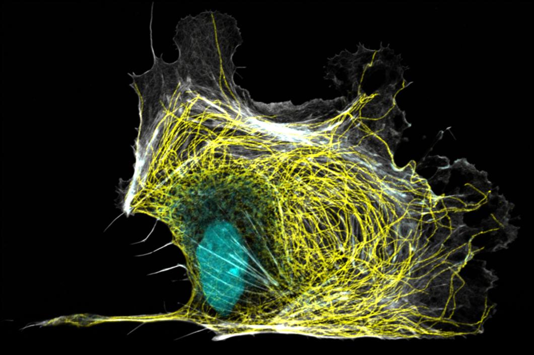 biochemistry-and-biophysics-of-the-cytoskeleton