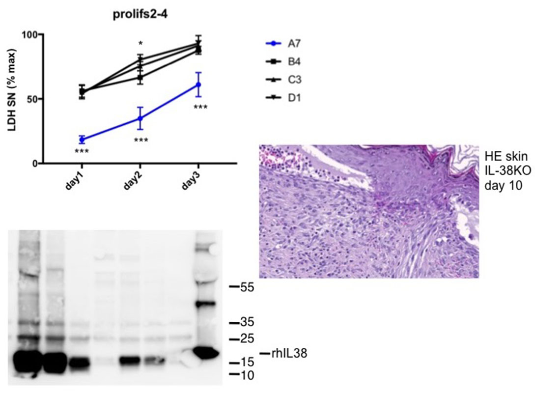 biology-interleukin-38