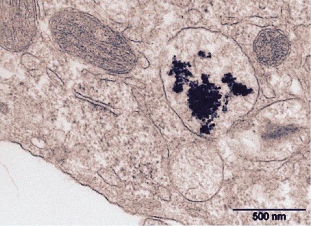 biopharmaceutical-sciences