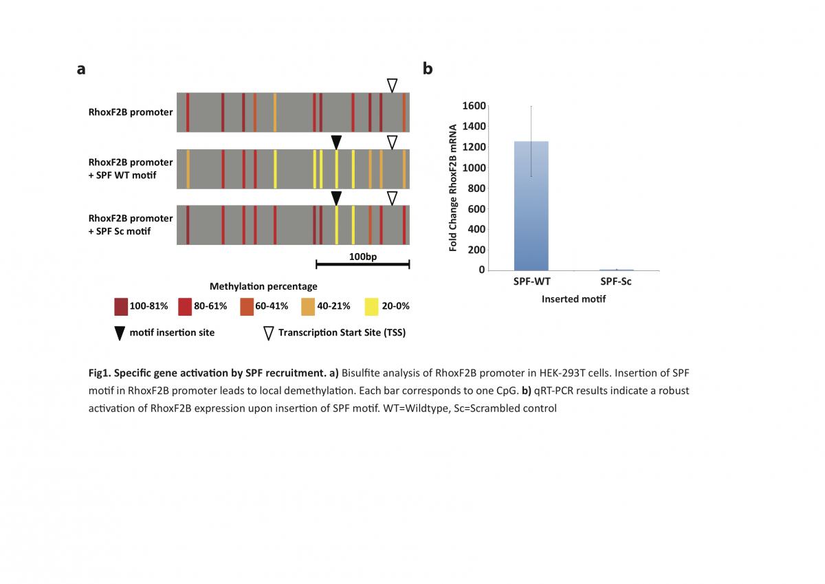 epigenetics-and-development
