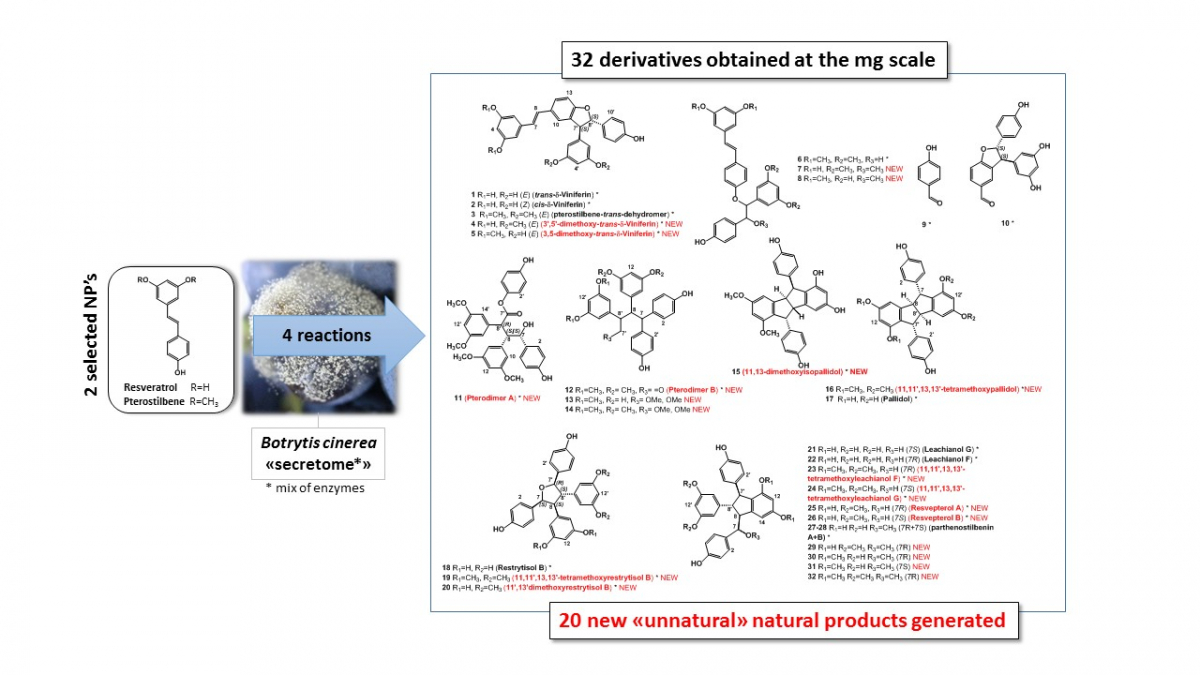 improving-natural-products-chemical-biodiversity-by-enzymatic-biotransformation