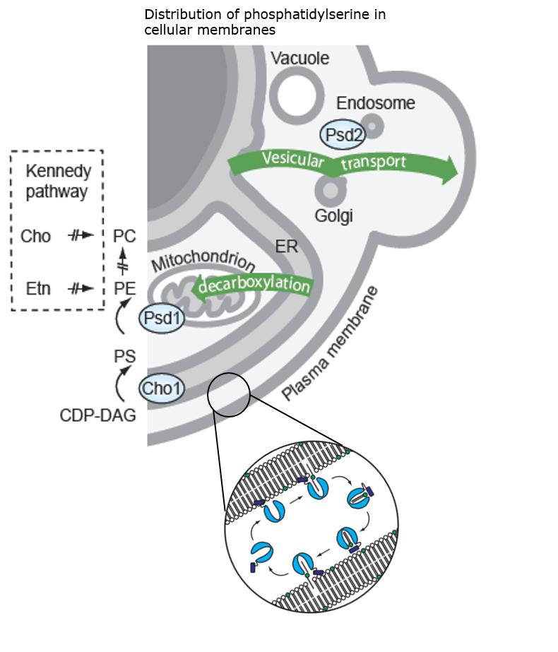 lipid-transport-and-metabolism