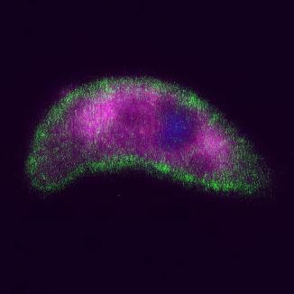 signalling-in-malaria-parasites