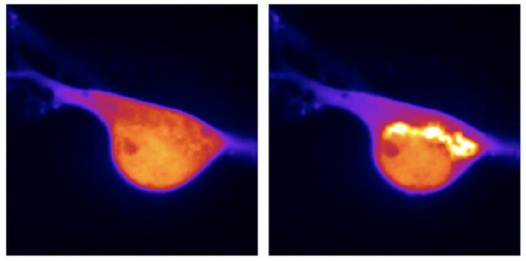 spatiotemporal-control-opioid-receptor-signaling