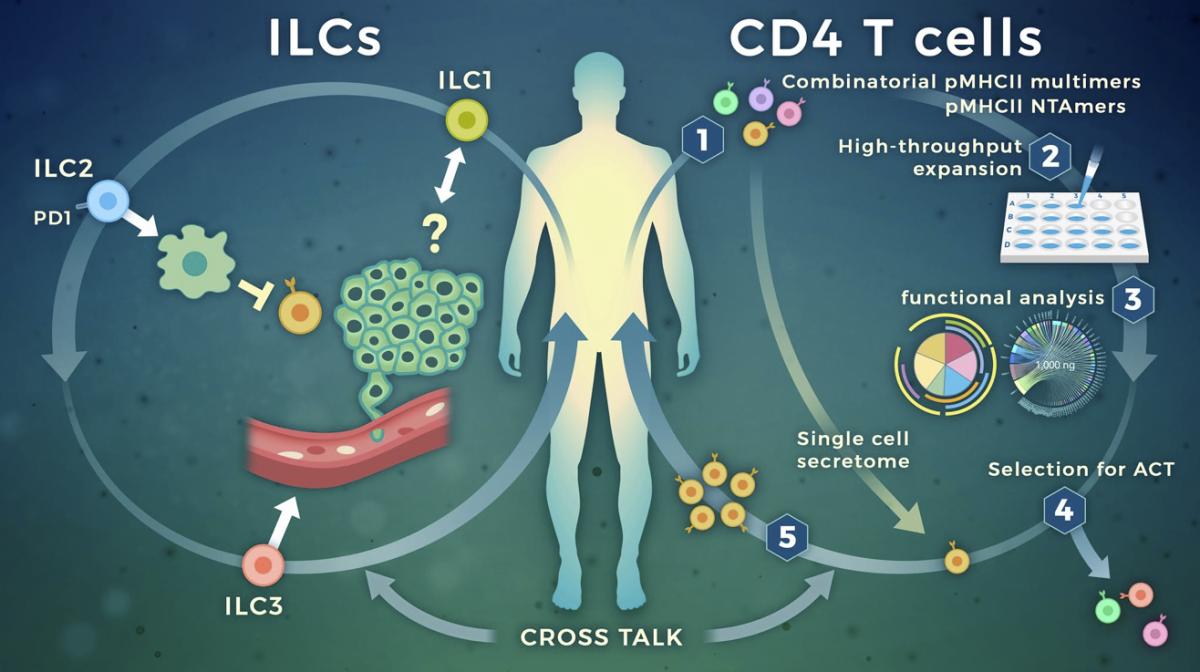 targeting-cytokine-secreting-lymphocytes-cancer-immunotherapy